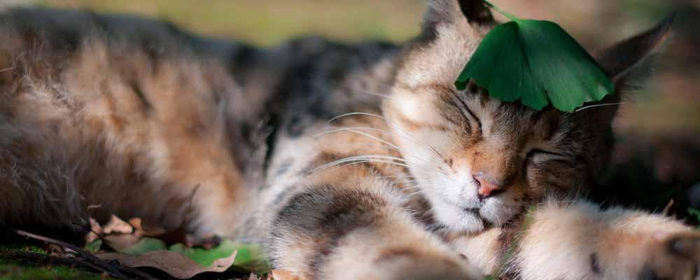 这只猫咪的跳跃力不只强到可以达196公分,就连跳跃的样子都能帅到让你爱上牠啊!